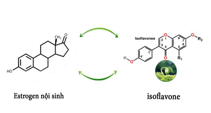 Chất isoflavone trong mầm đậu nành quyết định tính hiệu quả của sản phẩm