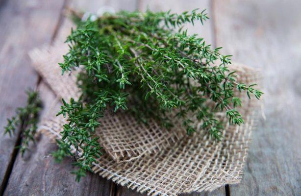 Cỏ xạ hương là 1 loại thực phẩm bổ sung nội tiết tố nữ