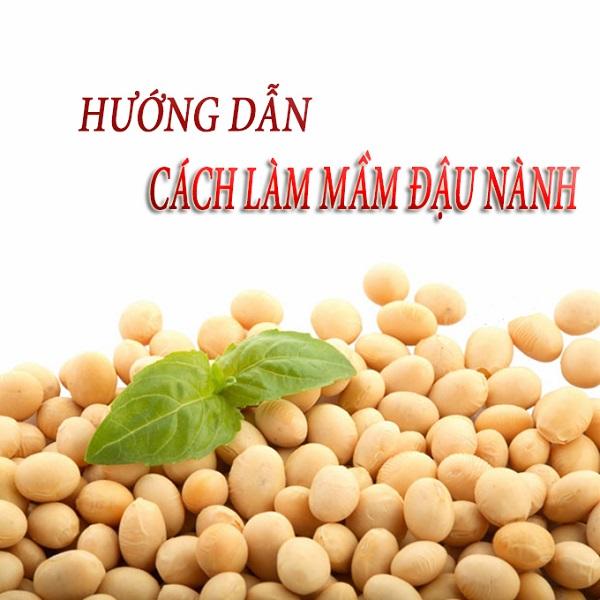 cách làm bột mầm đậu nành khô, tự làm bột mầm đậu nành, hướng dẫn cách làm bột mầm đậu nành, hướng dẫn làm bột mầm đậu nành, cách sấy khô mầm đậu nành, cách làm mầm đậu nành khô tại nhà, cách làm mầm đậu nành sấy khô, cách làm mầm đậu nành khô