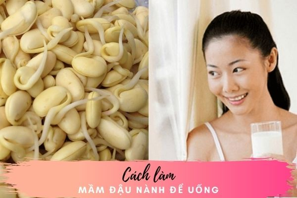 Bỏ túi cách làm mầm đậu nành để uống cực đơn giản ngay tại nhà