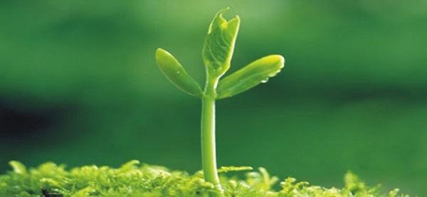 cách làm mầm đậu nành không bị thối, cách ủ mầm đậu nành không bị thối