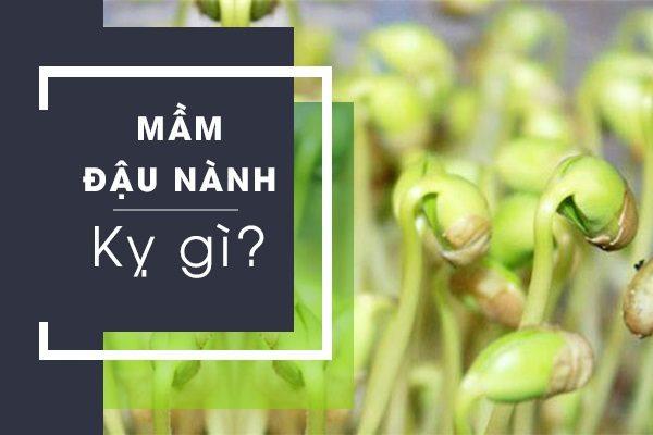 mầm đậu nành kỵ gì, mầm đậu nành kỵ đường đỏ, mầm đậu nành kỵ mật ong, mầm đậu nành kỵ trứng, thực phẩm kỵ với mầm đậu nành, mầm đậu nành kỵ gì không