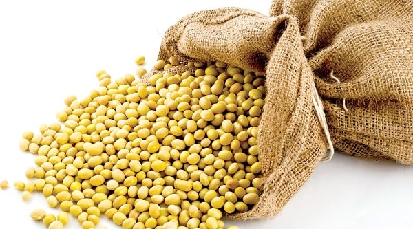 Những hạt đỗ to mảy sẽ cho ra những viên mầm đậu nành giàu dưỡng chất, cách làm viên mầm đậu nành tại nhà