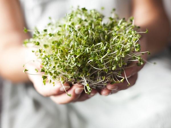 cách làm rau mầm đậu nành, cách làm rau mầm đậu tương, cách làm rau mầm từ đậu tương, làm rau mầm đậu nành