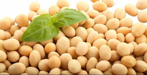 Mầm đậu nành có độc không, các chuyên gia hàng đầu nói gì?