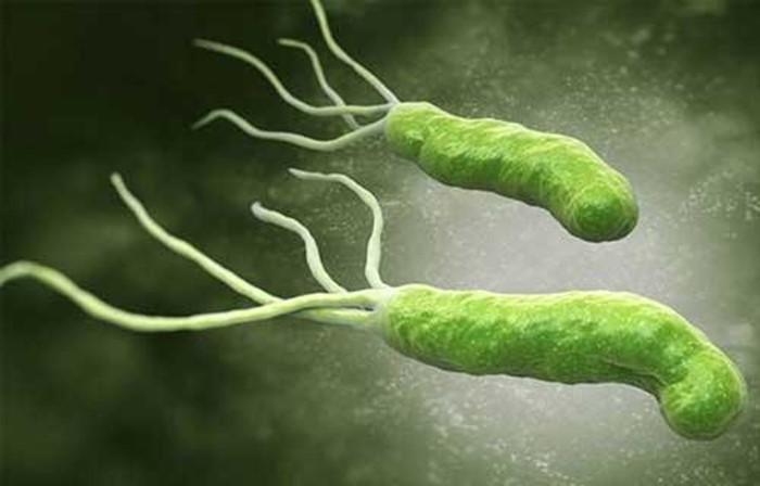 Hình thái vi khuẩn HP dạ dày