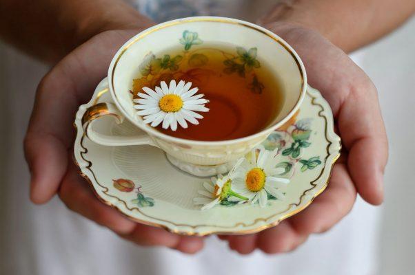Trà hoa cúc rất tốt cho hệ tiêu hóa, giảm thiểu tình trạng ợ hơi nhiều lần